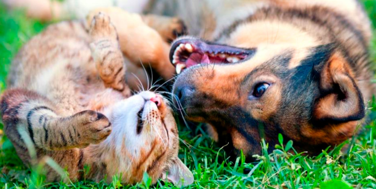 McKee Project – Spay/Neuter Vet Costa Rica Dog Cat Pet